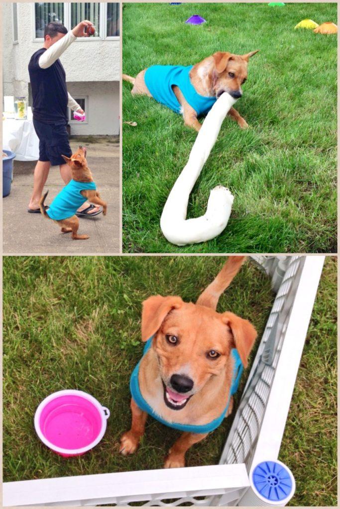 Grizz' Dog Birthday Party | URBAN FURBABY