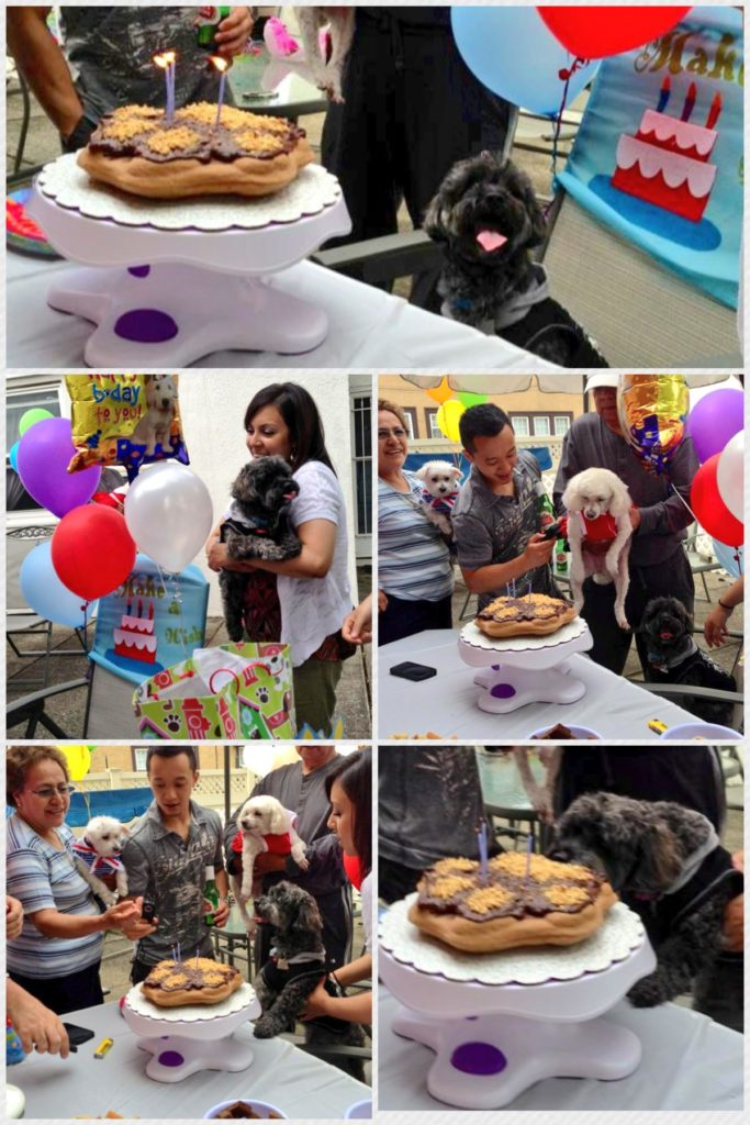 How to throw a Dog Birthday Party under $100 plus there's a Dog-Safe Banana Paw-ty Cake with Carob Frosting recipe! | URBAN FURBABY