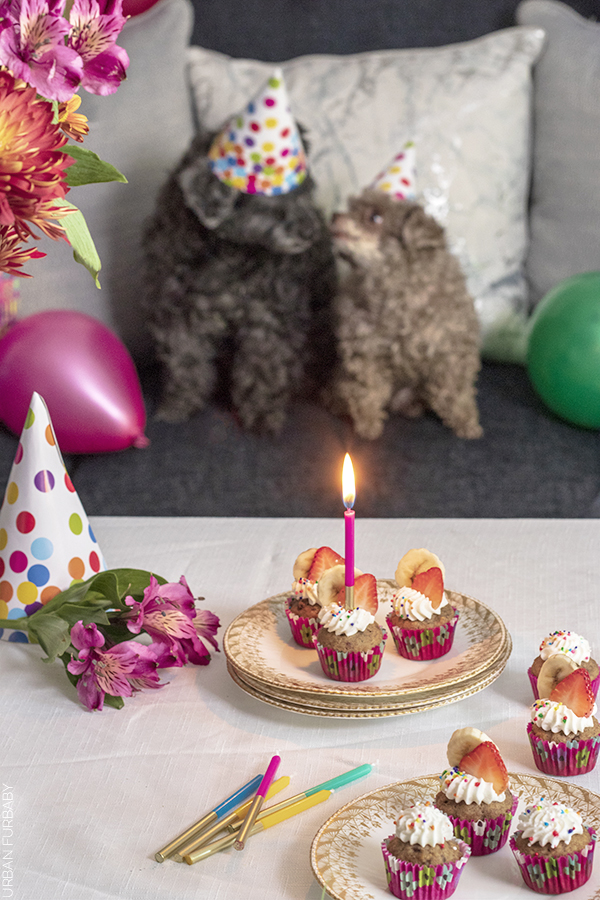 Chocolate's 10th Birthday Party with Dog Safe Strawberry and Banana Cupcakes | URBAN FURBABY